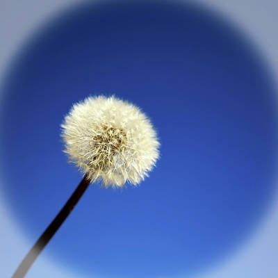 Photograph - Make A Wish by Judy Vincent