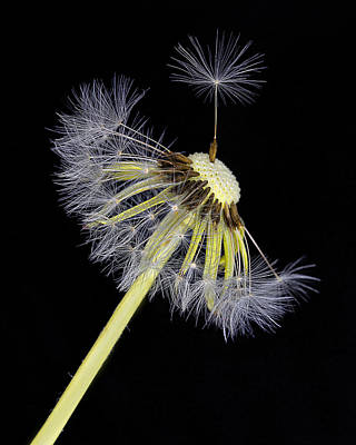 Photograph - Make A Wish by Ken Barrett