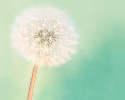 Make A Wish - Large Art Print by Amy Tyler
