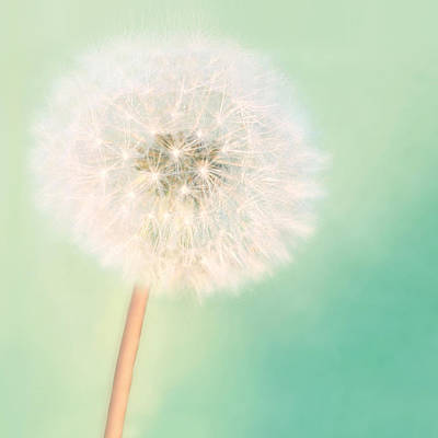 Dandelion Photograph - Make A Wish - Square Version by Amy Tyler