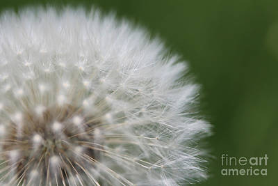 Photograph - Make A Wish by Stacey Zimmerman