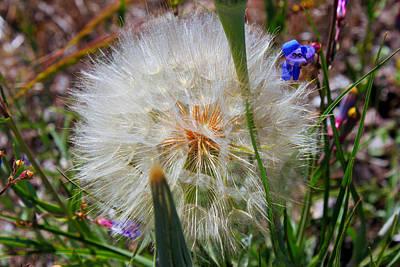 Photograph - Make A Wish by Susan Vineyard