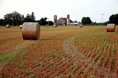 Photograph - Make Hay by Debbie Oppermann
