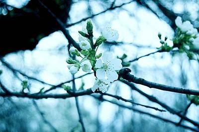 Cherry Blossoms Digital Art - Make Me Laugh Make Me Smile - Deep Cut Gardens by Angie Tirado