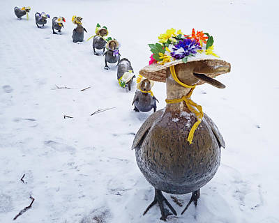 Photograph - Make Way For Ducklings A Little Early For The Spring Bonnets by Toby McGuire
