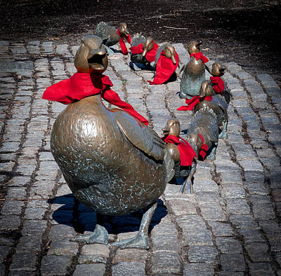 Safari - Make Way for Ducklings, Boston Massachusetts by Jean-Louis Eck
