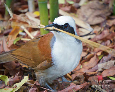 Wild Birds Photograph - Making A Nest by Judy Kay