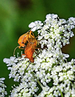 Animal Photograph - Making Orange 2 by Steve Harrington