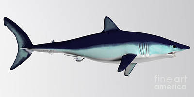 Sharks Painting - Mako Shark Side Profile by Corey Ford