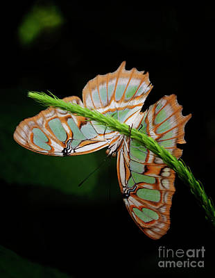 Photograph - Malachite Puts On A Show by Ruth Jolly