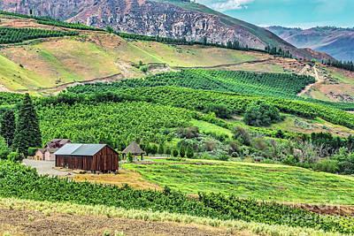 Photograph - Malaga Vineyards by Jean OKeeffe Macro Abundance Art