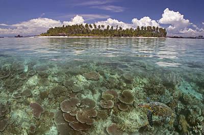 Photograph - Malaysia, Mabul Island by Dave Fleetham - Printscapes