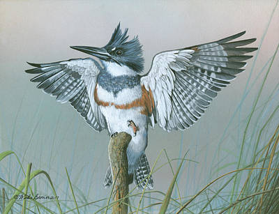 Painting - Male Belted Kingfisher by Mike Brown
