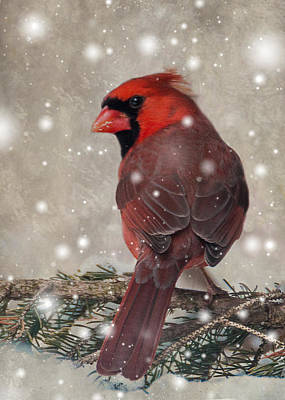 Male Cardinal In Snow #1 Art Print