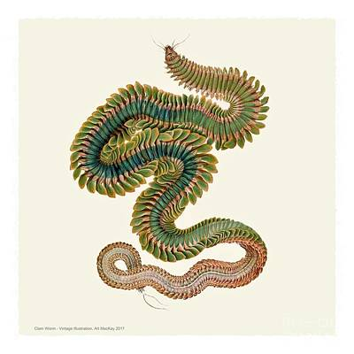 Digital Art - Male Clam Worm by Art MacKay
