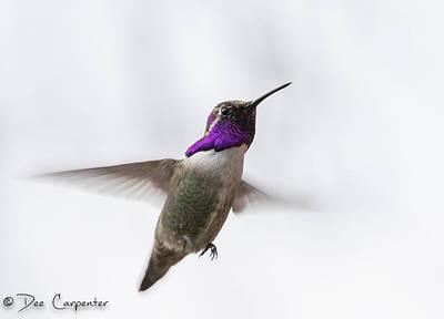 Photograph - Male Costa's Hummingbird by Dee Carpenter