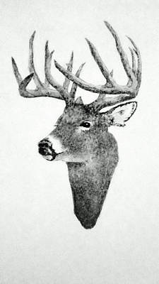 Animals Drawings - Male Deer - Black and White by Michael Vigliotti