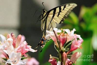 Painting - Male Eastern Tiger Swallowtail Butterfly In Flight by J McCombie