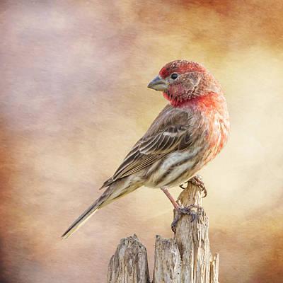 Finch Digital Art - Male Finch Poses On Post by Bill Tiepelman