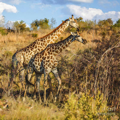 Digital Art - Male Giraffe With Pregnant Female by Liz Leyden