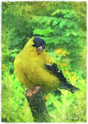 Photograph - Male Goldfinch - Digital Effect II  by Debbie Portwood