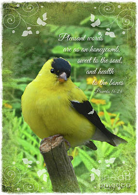 Photograph - Male Goldfinch With Verse by Debbie Portwood