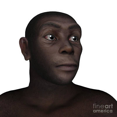 Indigenous Culture Digital Art - Male Homo Erectus Portrait by Elena Duvernay