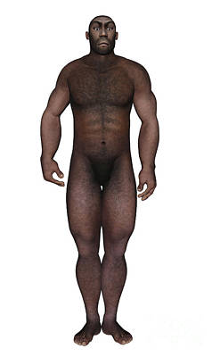Indigenous Culture Digital Art - Male Homo Erectus Standing by Elena Duvernay