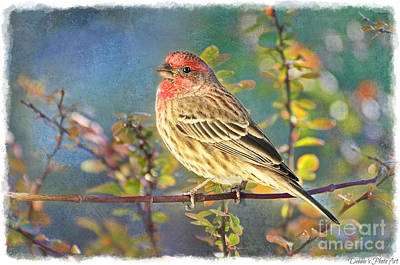 Photograph - Male Housefinch With Colorful Leaves by Debbie Portwood