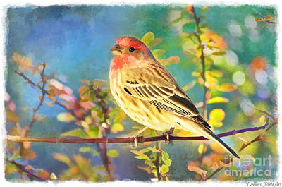 Photograph - Male Housefinch With Colorful Leaves - Digital Paint 1  by Debbie Portwood