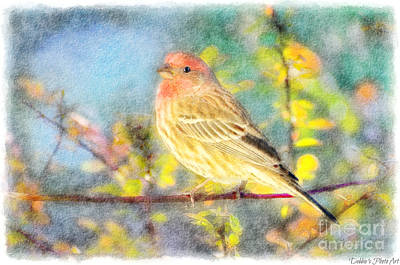 Photograph - Male Housefinch With Colorful Leaves - Digital Paint 2 by Debbie Portwood