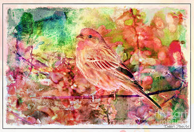 Photograph - Male Housefinch With Colorful Leaves - Digital Paint 3 by Debbie Portwood