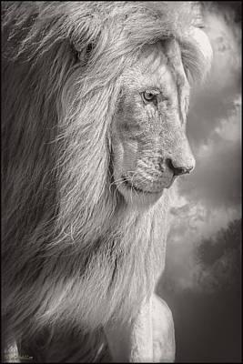 Cat Photograph - Male Lion Black And White by LeeAnn McLaneGoetz McLaneGoetzStudioLLCcom