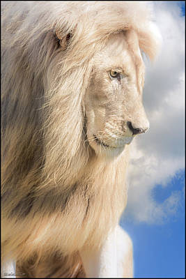 Lion Photograph - Male Lion Dreams by LeeAnn McLaneGoetz McLaneGoetzStudioLLCcom