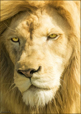 Endangered Photograph - Male Lion by LeeAnn McLaneGoetz McLaneGoetzStudioLLCcom