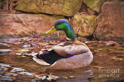 Photograph - Male Mallard Art by Kerri Farley