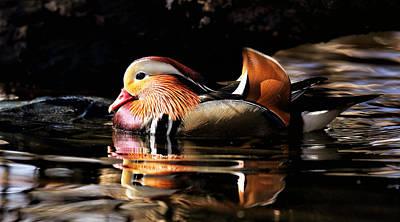 Celebrity Pop Art Potraits - Male Mandarin Duck 2 by Grant Glendinning