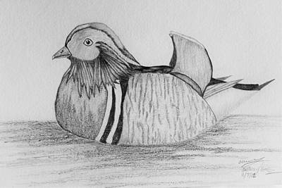 Drawing - Male Mandrain Duck  by Amy Gallagher