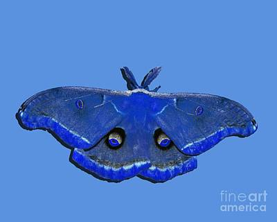 Shower Digital Art - Male Moth Navy Blue .png by Al Powell Photography USA
