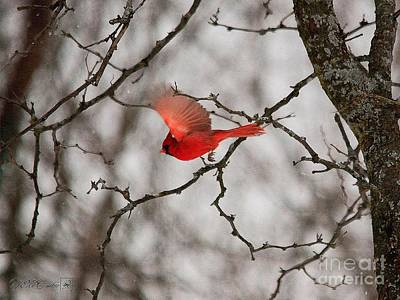 Painting - Male Northern Cardinal In Winter by J McCombie