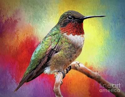 Digital Art - Male Rubythroated Hummingbird by Suzanne Handel