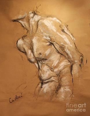 Drawing - Male Torso by Debora Cardaci