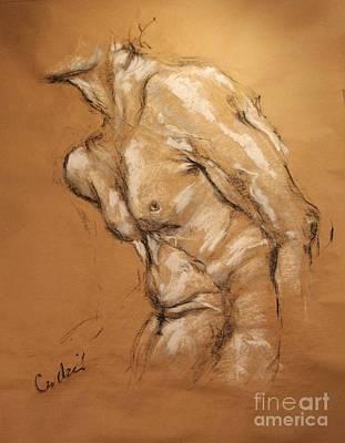 Drawing - Male Torso by Debora Cardaci
