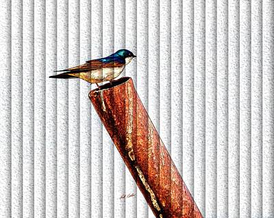 Photograph - Male Tree Swallow No. 1 - The Slat Collection by Bill Kesler