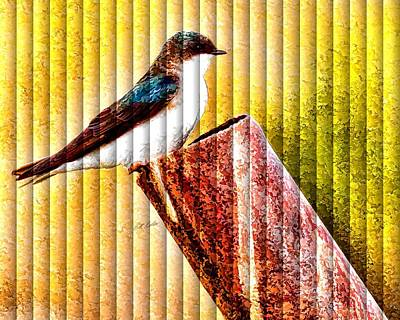 Photograph - Male Tree Swallow No. 2 - The Slat Collection by Bill Kesler