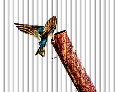 Photograph - Male Tree Swallow No. 3 - The Slat Collection by Bill Kesler