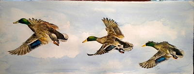 Painting - Mallard 3 In Flight by Diane Ziemski