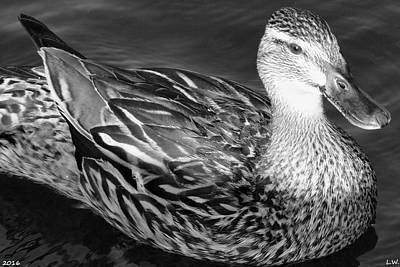 Photograph - Mallard Black And White by Lisa Wooten