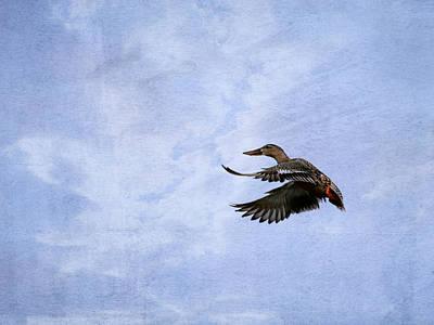 Photograph - Mallard  by Charles McKelroy