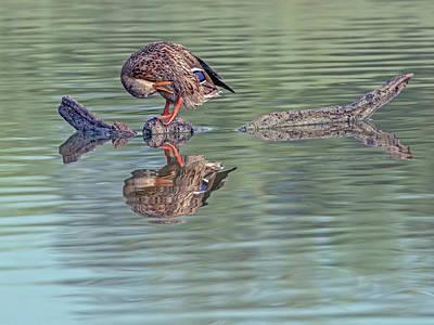 Photograph - Mallard Duck Female by Tam Ryan
